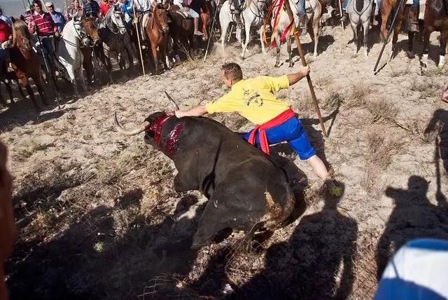 torodelavega5 - Antitaurinos lanceados en lugar del animal en la sangrienta fiesta del Toro de la Vega