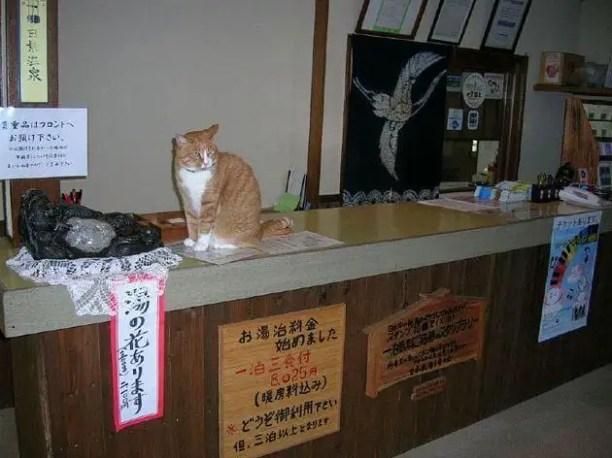 28860582384efbfe3651o - Tashiro, la Isla de los Gatos