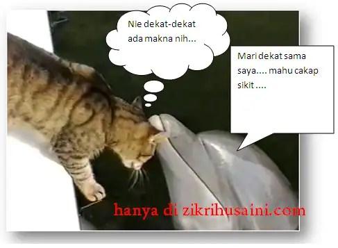 Bila kucing dan Ikan Dolphin berinteraksi, kucing dan dolphin,