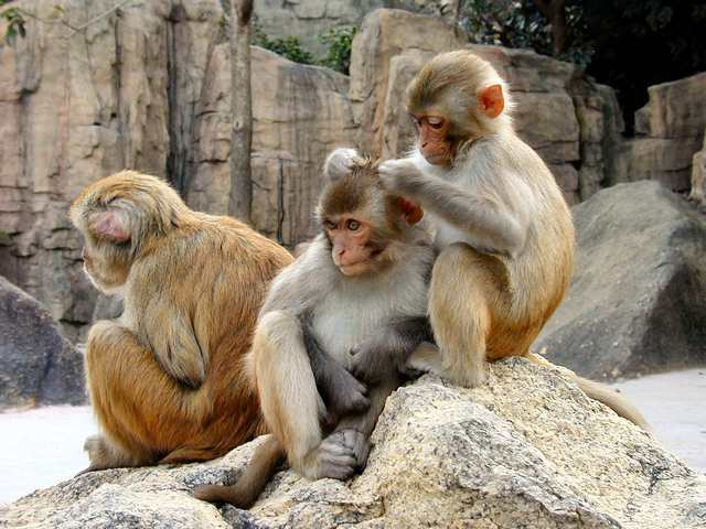 Noticias Curiosas - monos, política, macacos, amistades