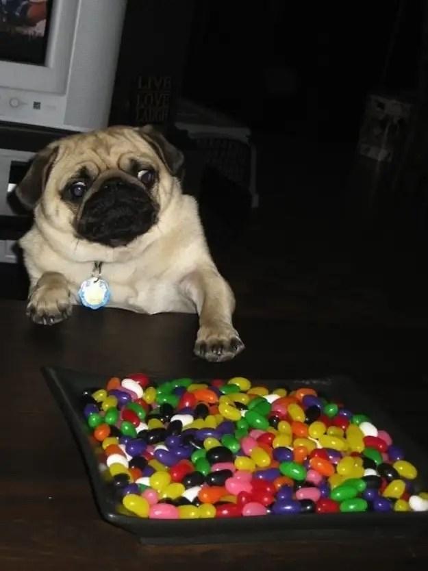 enhancedbuzz17290136380 - #Fotos 33 perros totalmente descontrolados