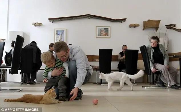 article214612112f77b980 - En Viena abren el primer café para gatos de Europa