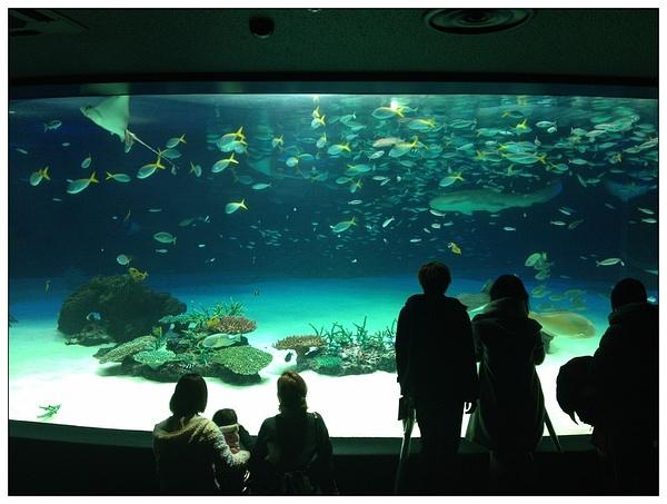 池袋阳光城楼顶的水族馆 可以盯着水生物一天