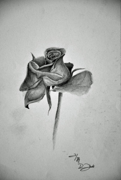 Rose XIX Zeichnung als Poster und Kunstdruck von robert