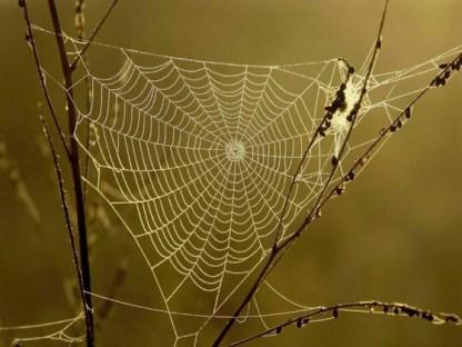 spider silk2