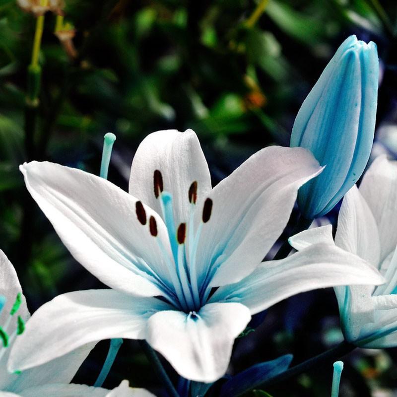 egrow 50pcs blue heart