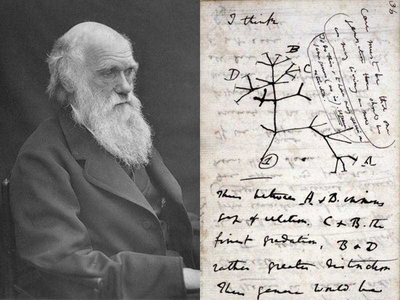 達爾文物種起源手稿 劍橋大學圖書館:可能遭竊 | 國際 | 重點新聞 | 中央社 CNA