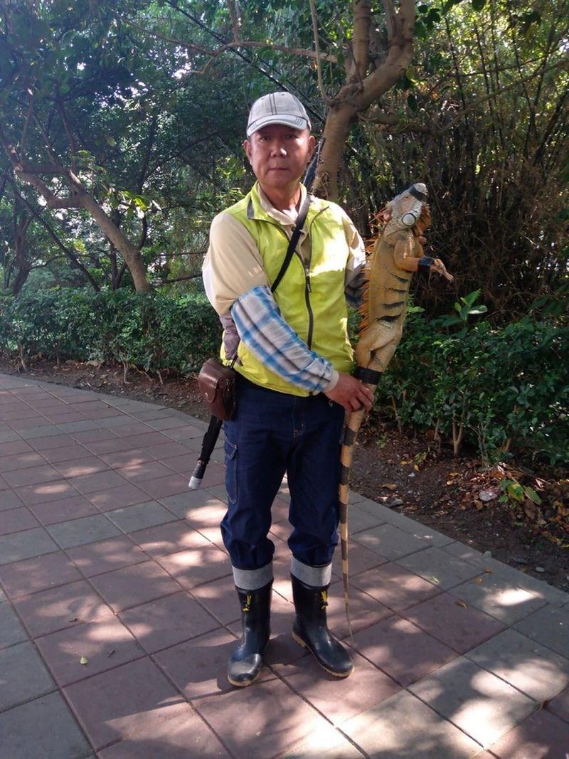屏東縣萬丹鄉有民眾日前在網路貼出一張巨尾綠鬣蜥照片,引起熱議,直說是「恐龍無誤」。屏東縣政府17日表示,這隻「小恐龍」已於16日成功捕捉,無須驚慌。(屏東縣政府提供)中央社記者郭芷瑄傳真 109年12月17日