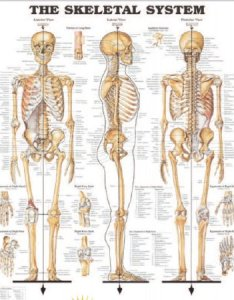 Anatomical chart company also mckesson medical surgical rh mmskesson