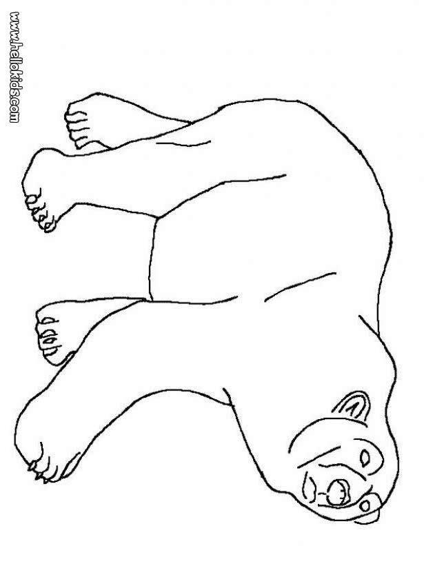Eisbär Ausmalbild Eisscholle