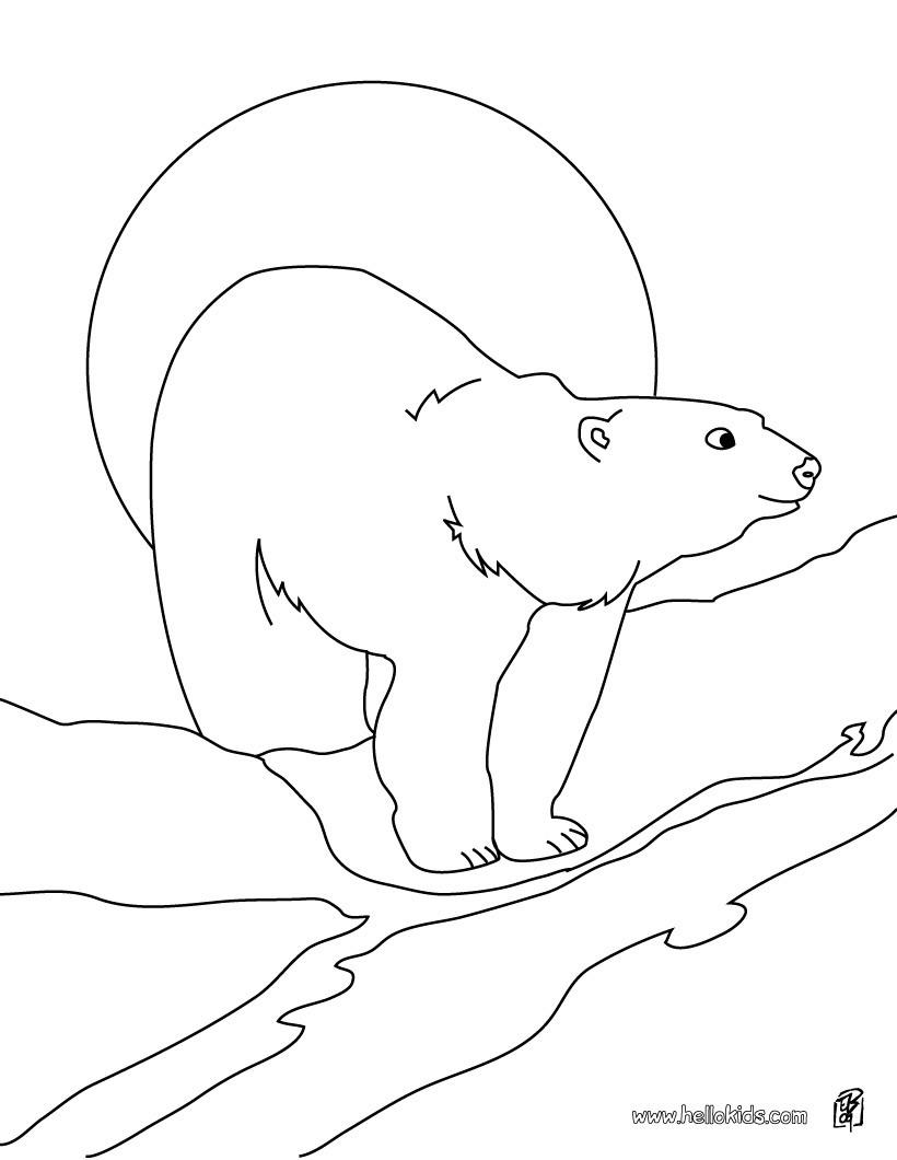 Eisbär zum ausdrucken zum ausmalen - dehellokids