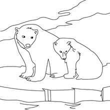 40 Eisbär Bilder Zum Ausdrucken - Besten Bilder von