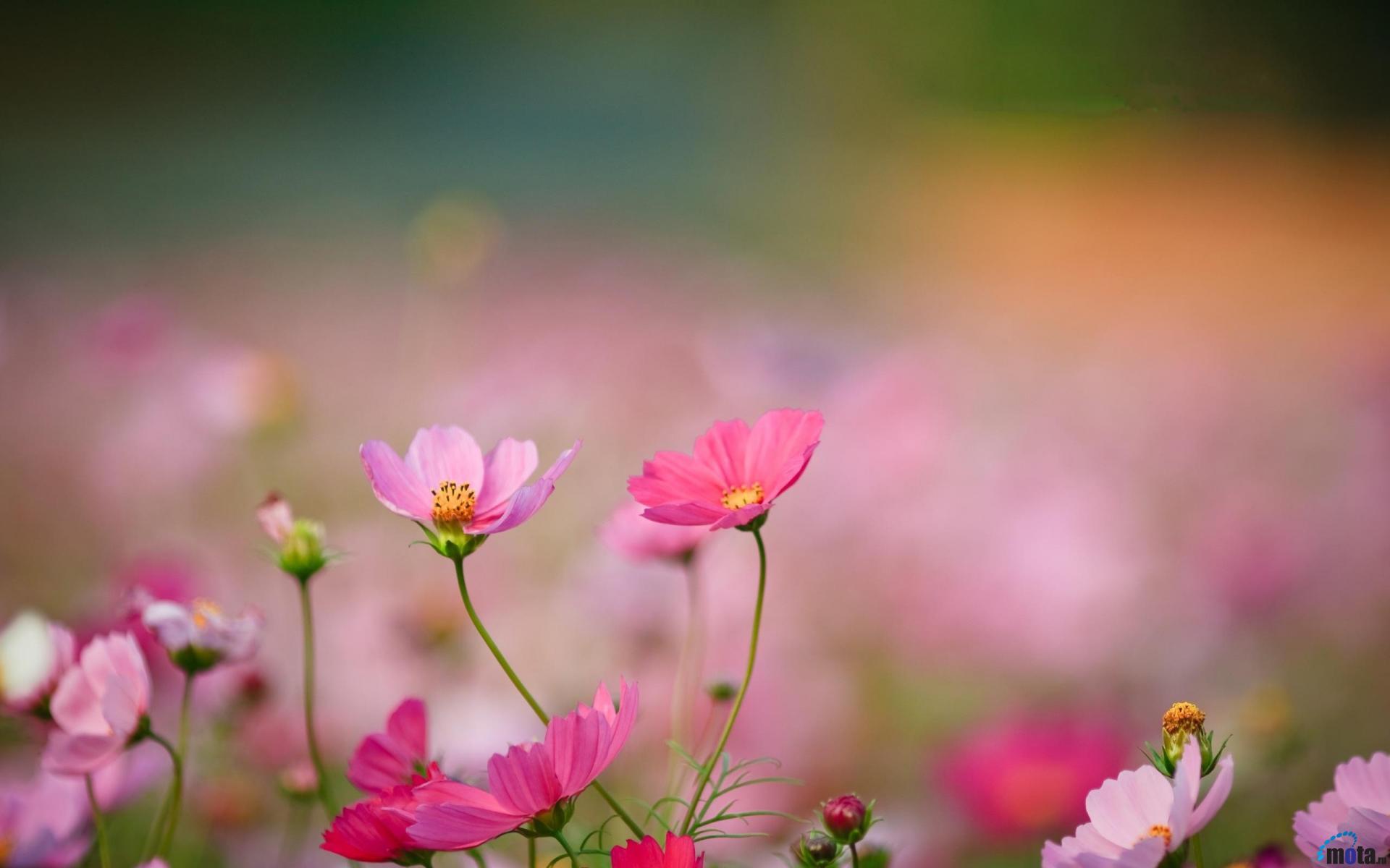 Kết quả hình ảnh cho wild flowers
