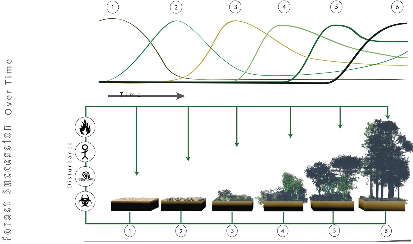 Succession graph pioneer also ap environmental science rh albert