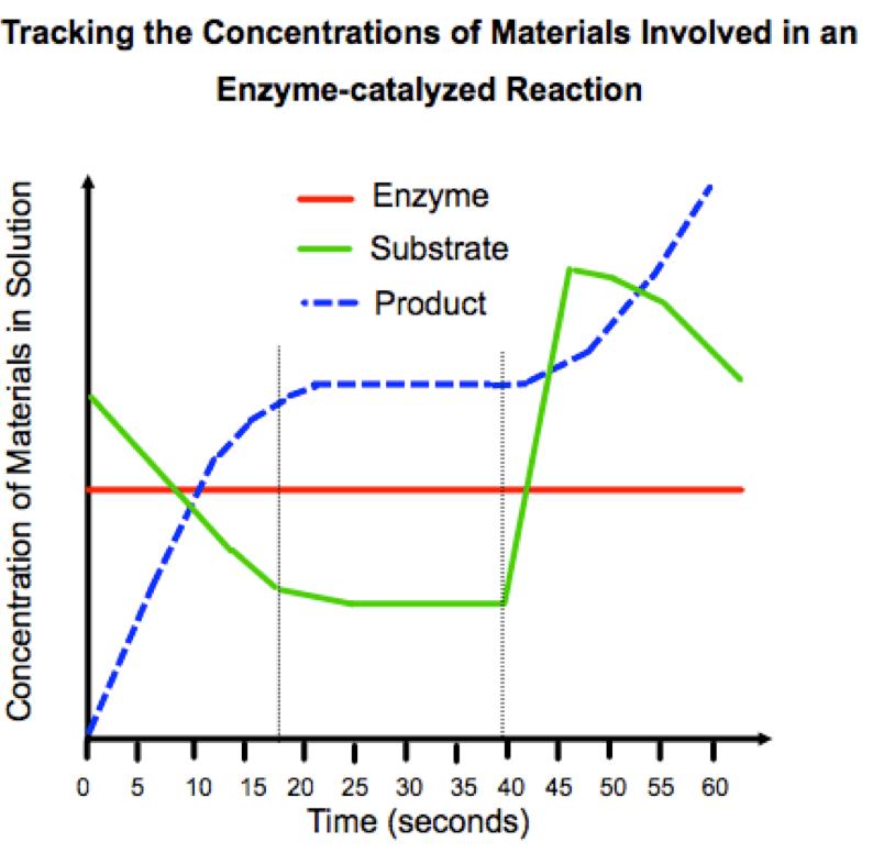 plot diagram activity 1999 ford taurus radio wiring ap biology enzyme graph