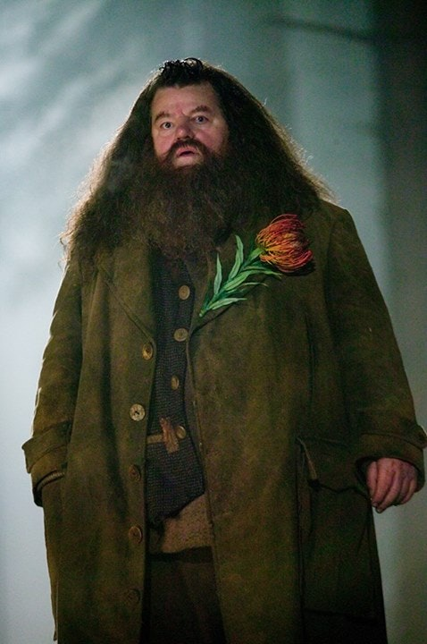 J.K. Rowling's 'Harry Potter' Character Hagrid Has a Sadder Story Than We  Realized