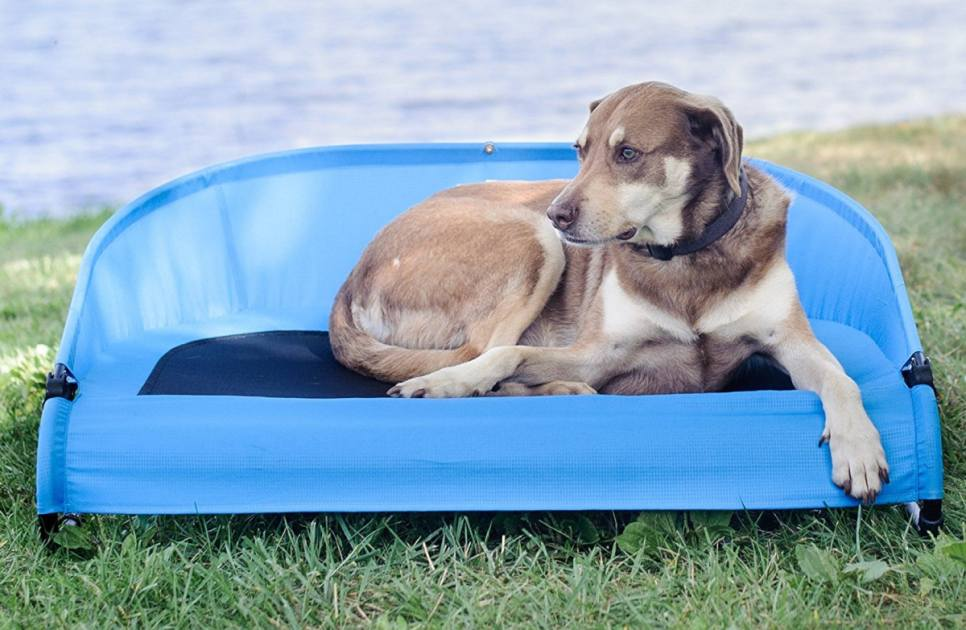 The 5 Best Cooling Dog Beds