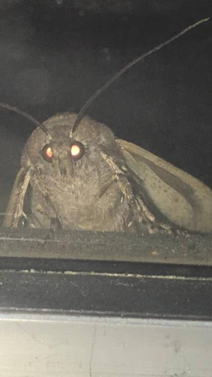 Moth Meme Original : original, Meme?, Here's, Seeing, Social, Media