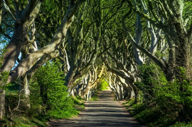 10. The Dark Hedges, Northern Ireland