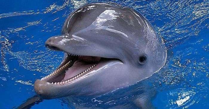 Bp Oil Spill Animals Cutest Animals Threatened By Bp Spill