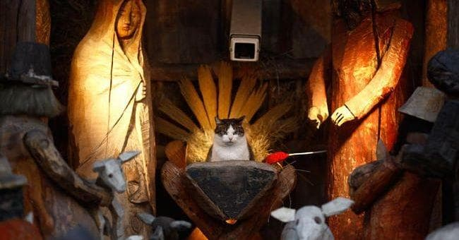 Cats In Nativity Scenes Funny Cat Christmas Pictures