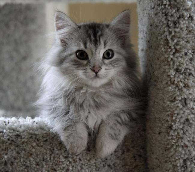 the most adorable kitten