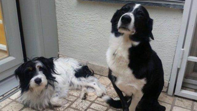 Attacke auf Tierfreundin: Wiener sind entsetzt! (Bild: Privat)