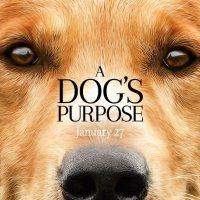 A Dog's Purpose 2017 720p BluRay x264 734 MB