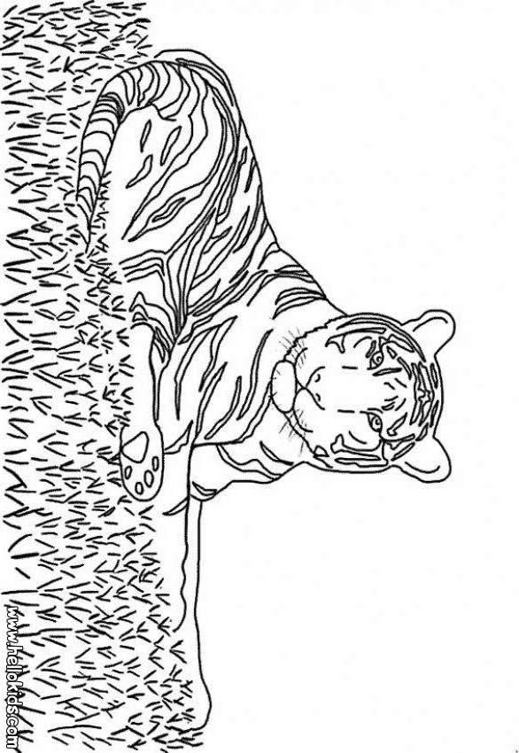 spacer Desenho de um Tigre