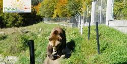 Еднодневна екскурзия до Белица и Добърско, с посещение на Парка за танцуващи мечки