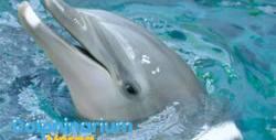 Вижте Делфин шоуто на Варна Делфинариум от 16 до 30 Септември