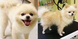 За любимото куче! Къпане, сушене, рязане на нокти, чистене на уши и протеинова маска