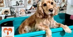 Подстригване, къпане и рязане на нокти на куче, плюс хранителна добавка - масло от сьомга