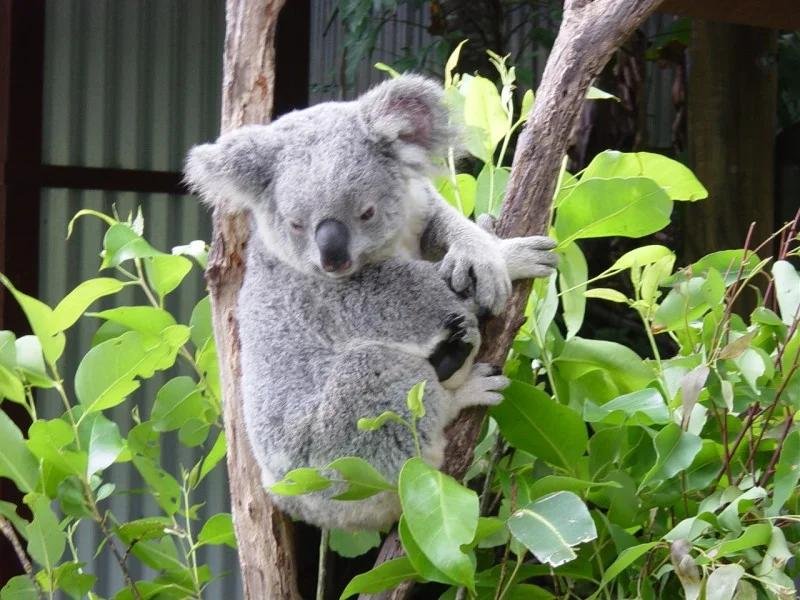 Featherdale Wildlife Park in Sydney: 11 reviews and 37 photos