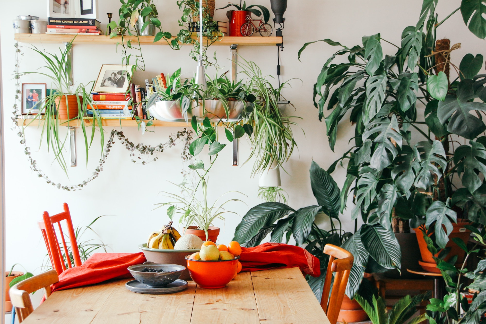 best plants for apartment dwellers