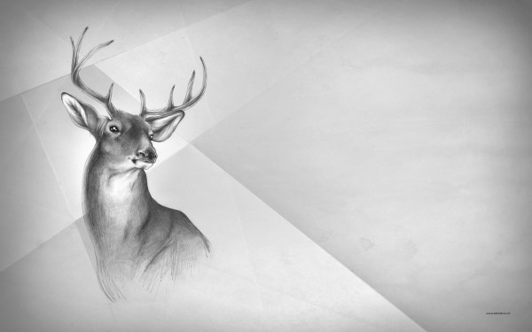 Black and White Deer Drawings