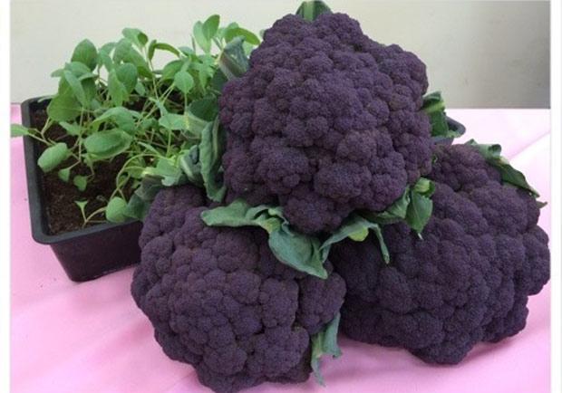 紫色花椰菜來了!花費34年培育成功 | 黃漢華 | 遠見雜誌