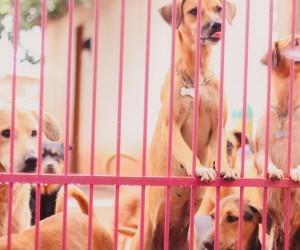 Trs meses depois lei que diminui casos de animais em risco continua no papel