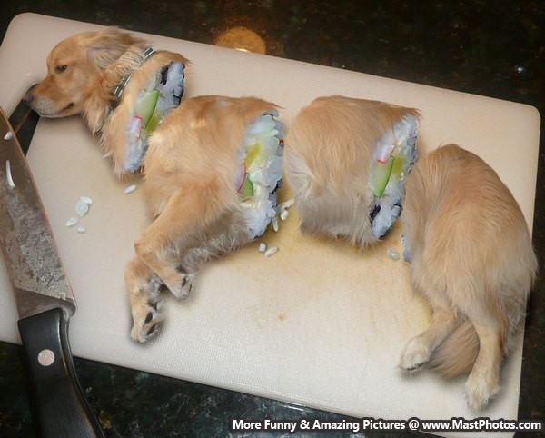 Awesome Dog Cake Designs