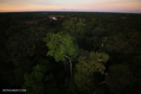 Rainforest in the Peruvian Amazon. Photo by Rhett A. Butler.