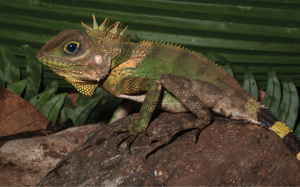 The Philippines' Mindanao Is A Treasure Trove Of Reptile And
