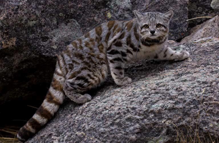 Biodiversity Endangered
