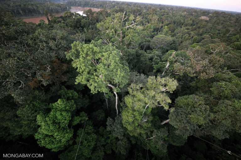 Though the habitat is known for being sunny, shade is an integral part of the rainforest, as seen from this Amazonian rainforest canopy. Photo by Rhett A. Butler.