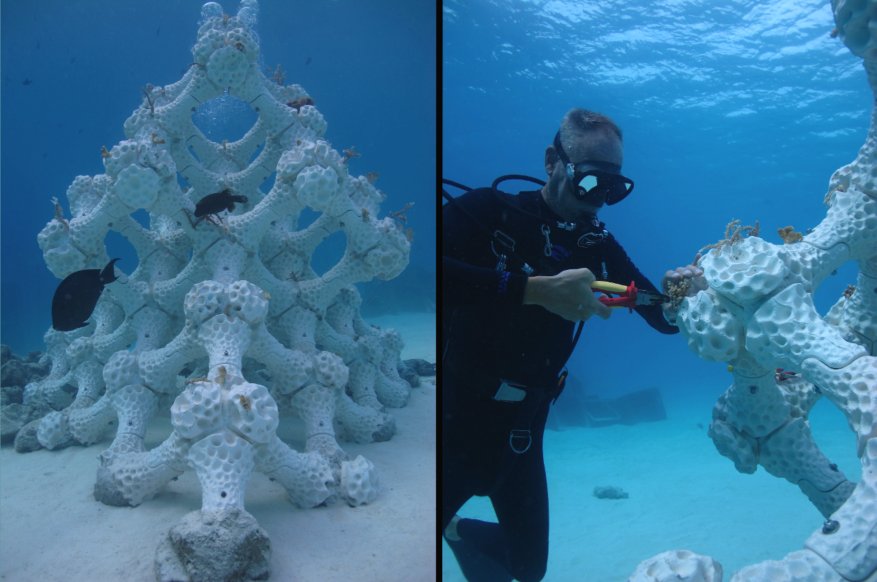 A New Dimension To Marine Restoration 3d Printing Coral Reefs