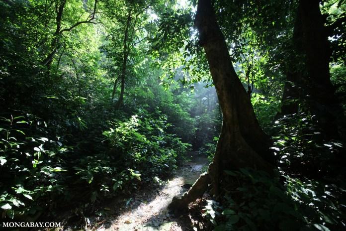 Lowland rainforest in Southeast Asia. Photo by Rhett A. Butler.