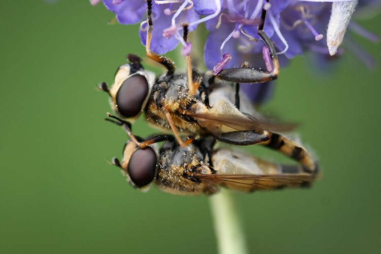 The Great Insect Dying: Vanishing act in Europe and North America