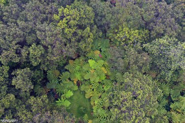 2019: The year rainforests burned