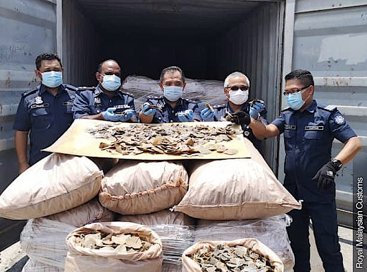 Malaysian authorities seize record 6 tons of African pangolin scales
