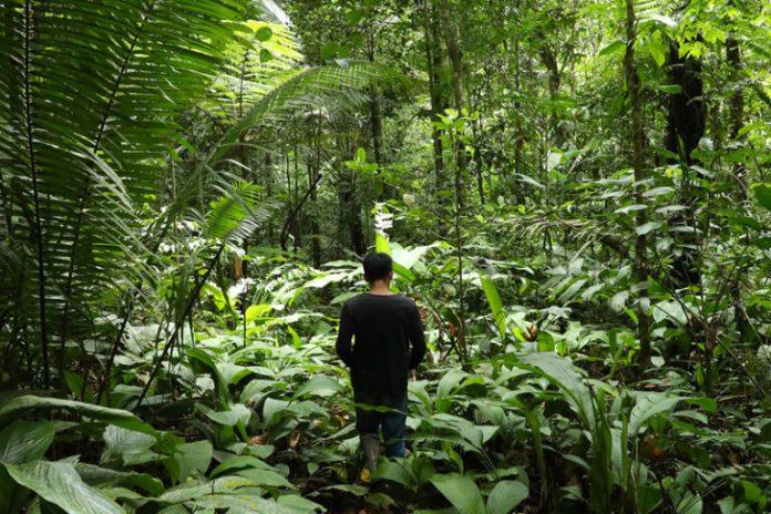 Indigenous Tikuna man in the Amazon rainforest