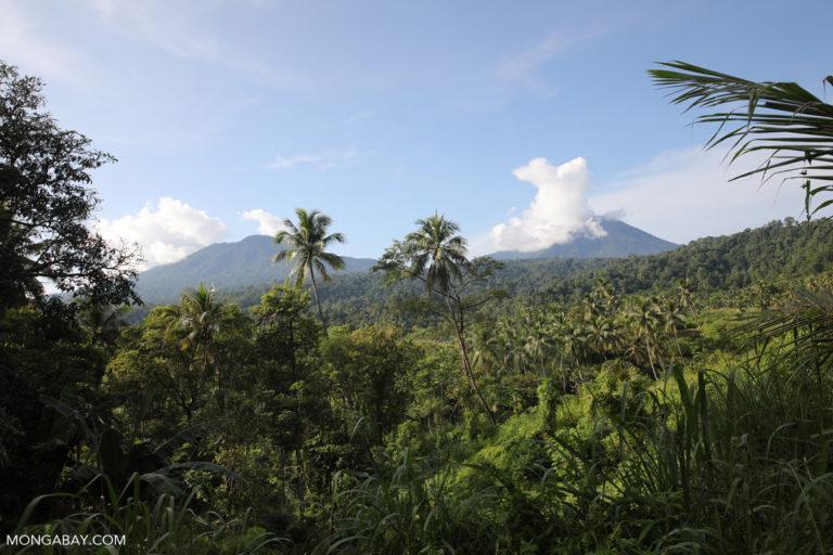 Indonesia bill weakening environmental safeguards to pass in October
